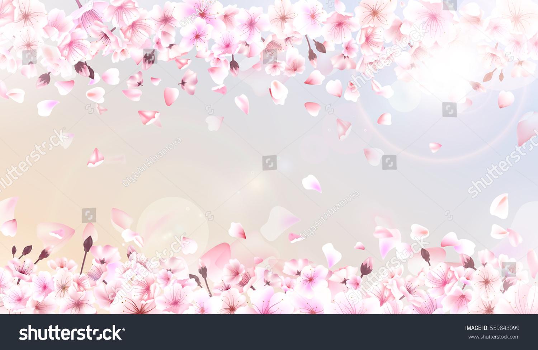 Spring Background Falling Sakura Pink Petals Ume Hanami Chinese