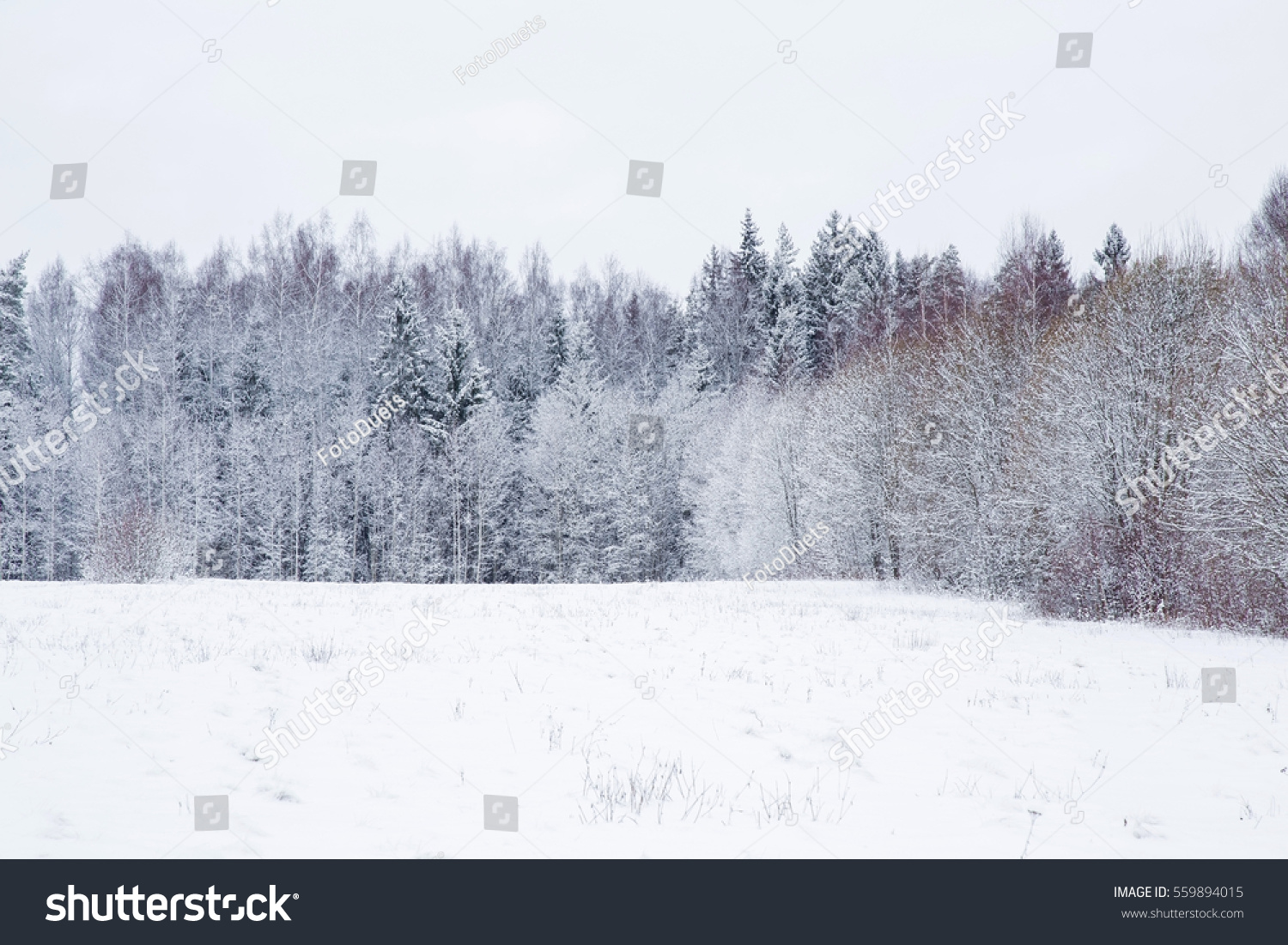 snowy forest white tree branches winter themed white snowy countryside forest tree branches stockfoto 255