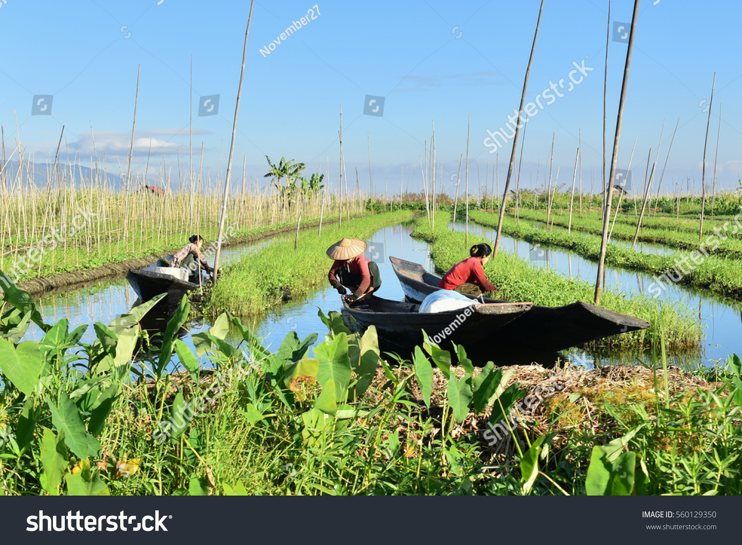 Local inle people on working floating stock photo for Local landscape gardeners