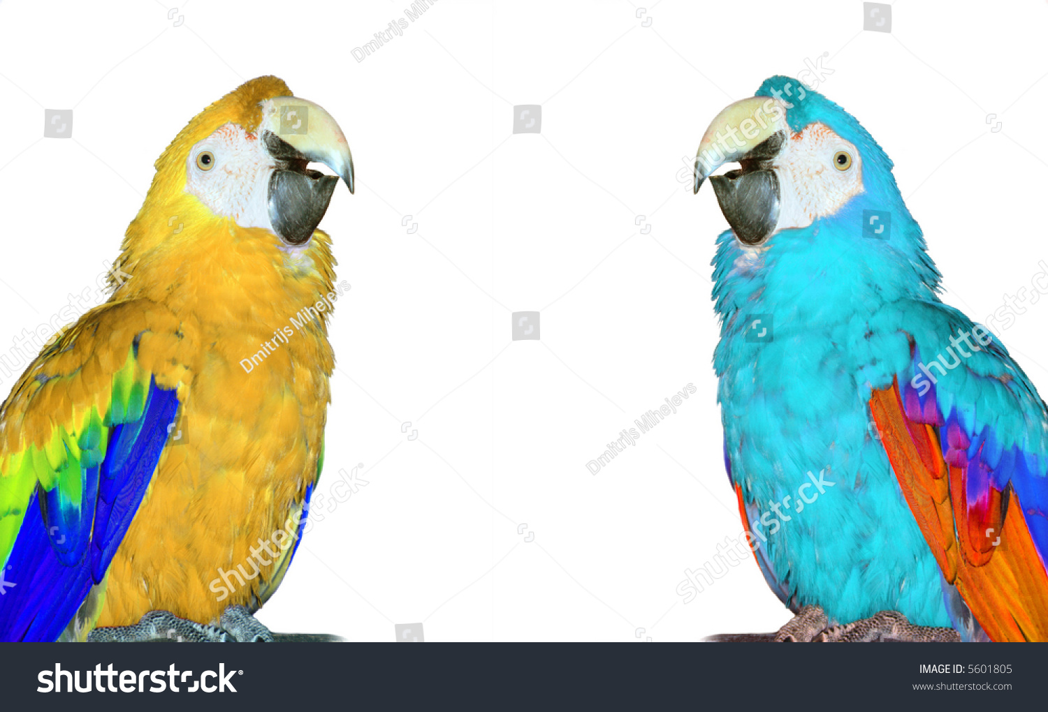 Blue and white macaw