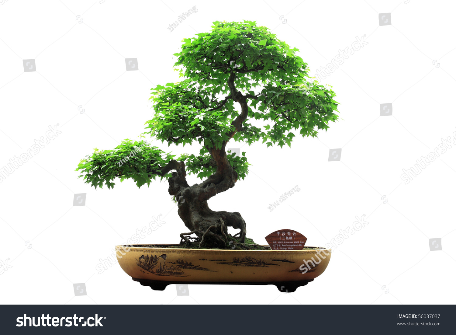 save to a lightbox bonsai tree