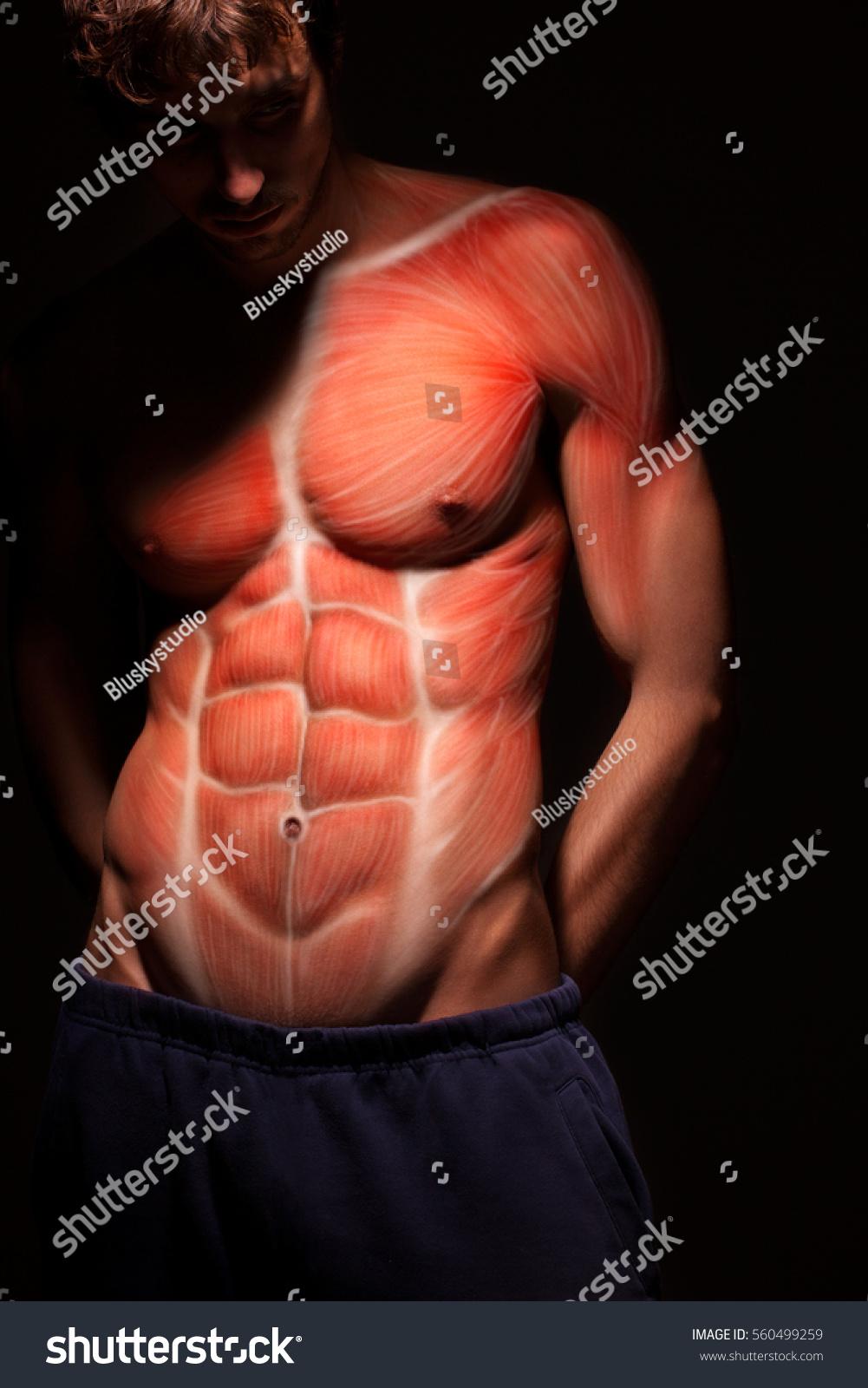 Male Body Anatomy Human Torso Muscle Stock Photo Edit Now