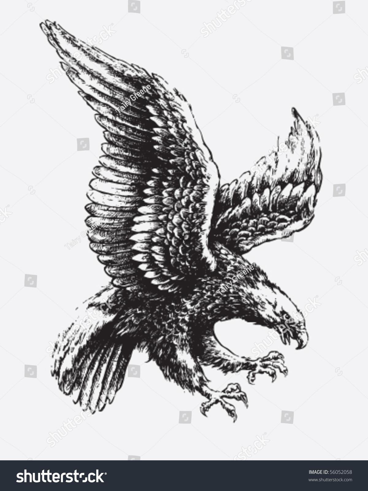 swooping eagle stock vector 56052058 shutterstock
