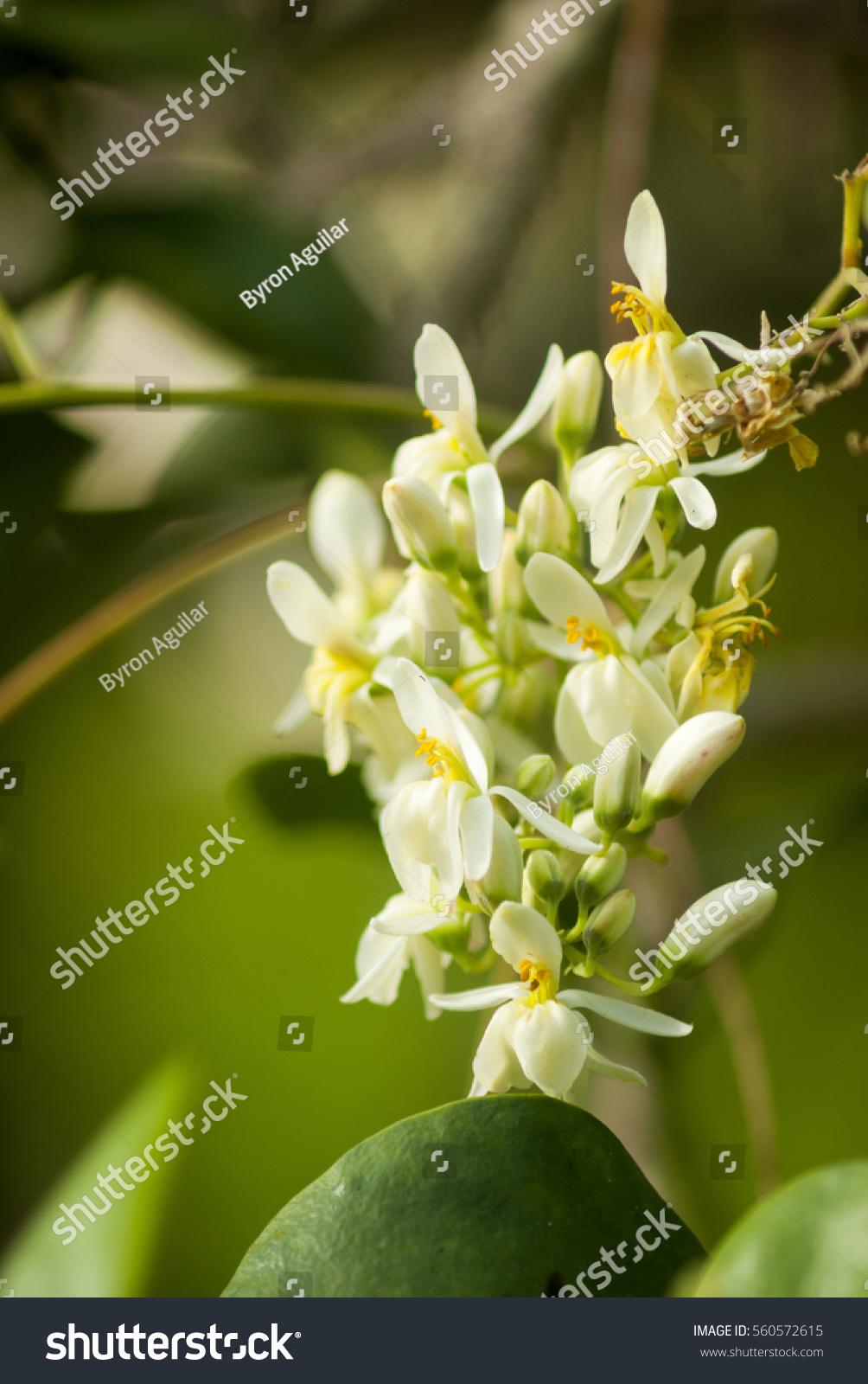 Tropical White Flower In A Garden Ez Canvas