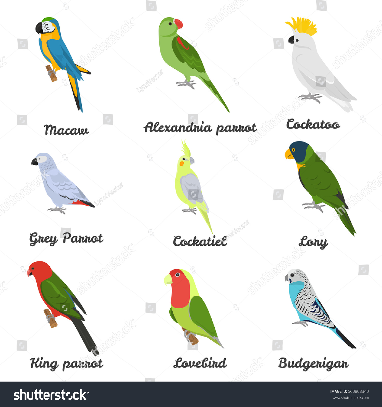 set color flat parrots icons their stock vector 560808340