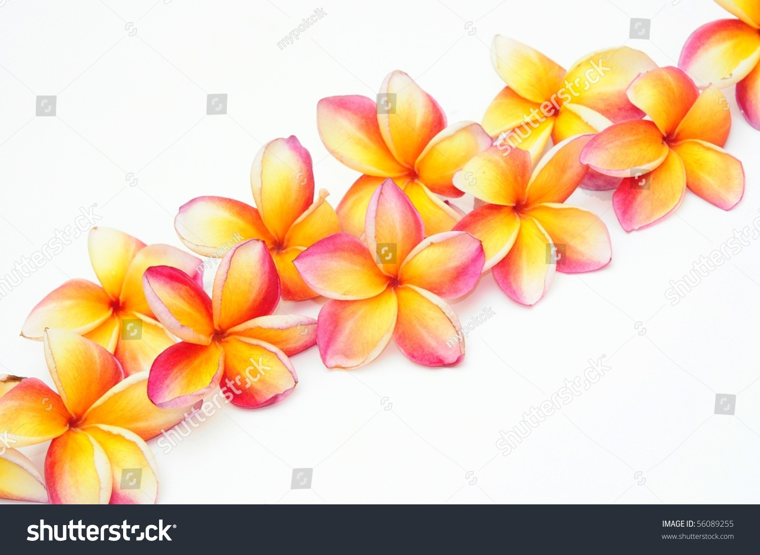 Lao&#39-s National flower. Plumeria is a small genus of 7-8 species ...