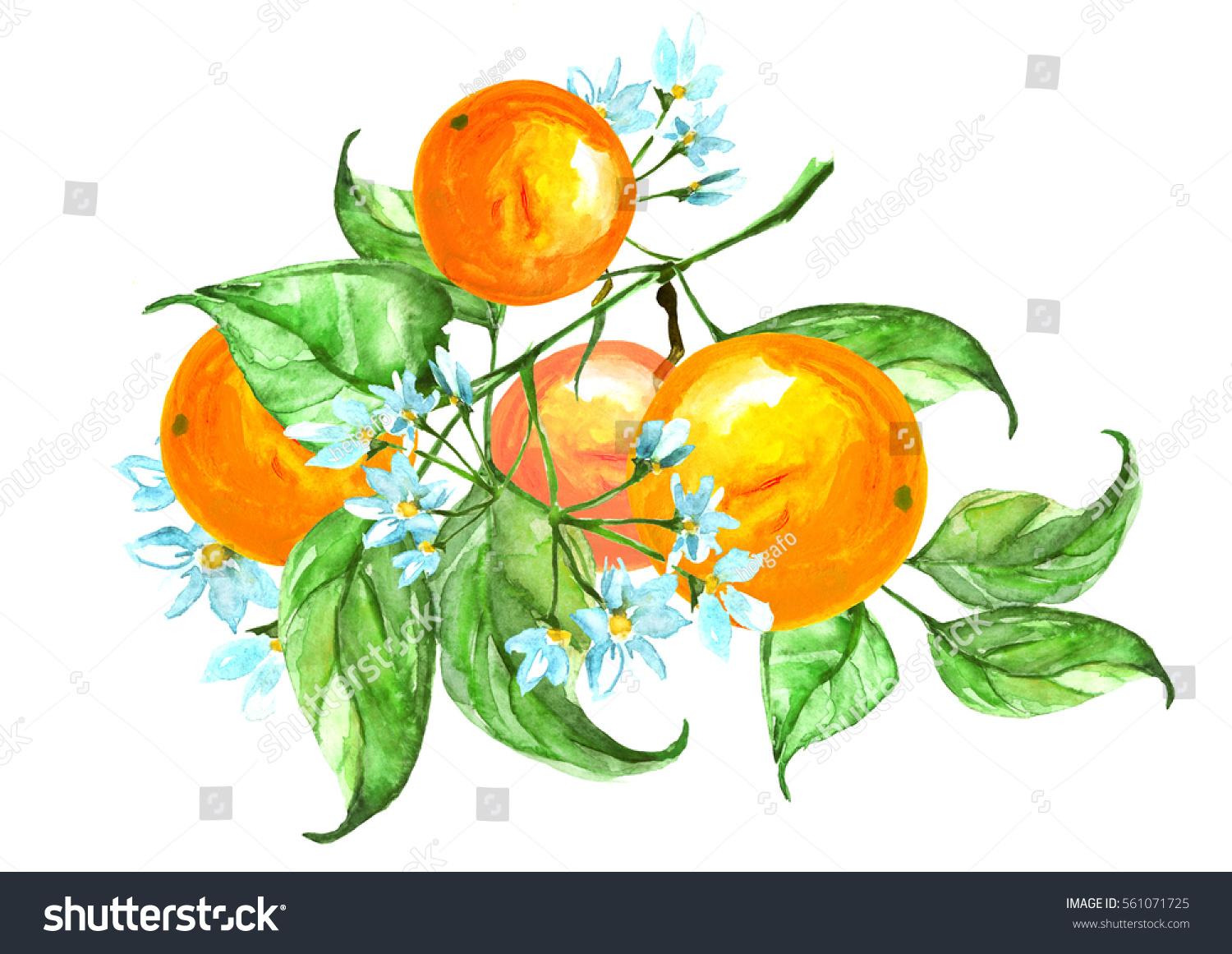 Watercolor Set Consists Fruit Orange Flowers Stock Illustration