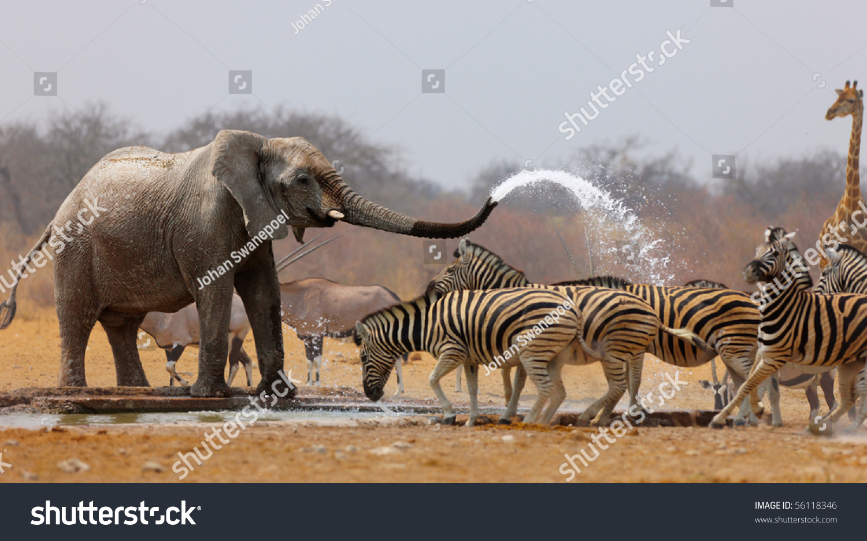 Elephant spraying water - photo#8
