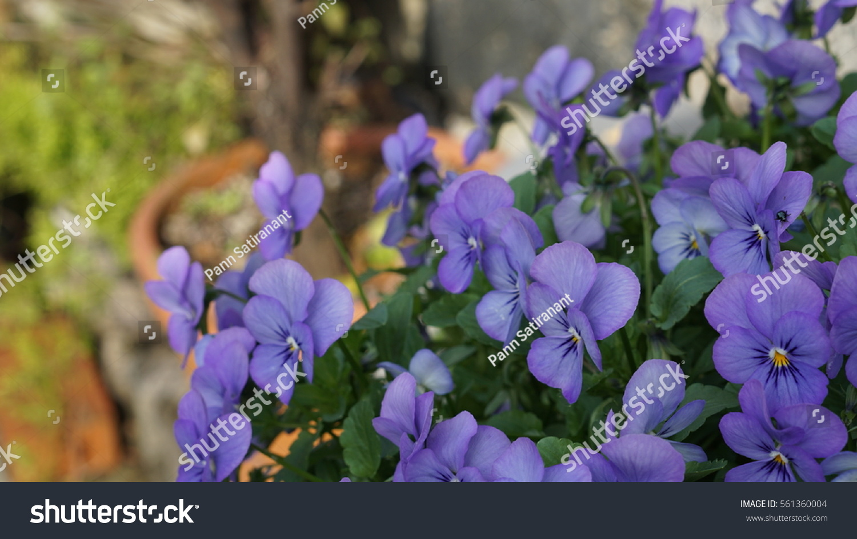 Purple Flowers In Forest Spring Landscape Ez Canvas