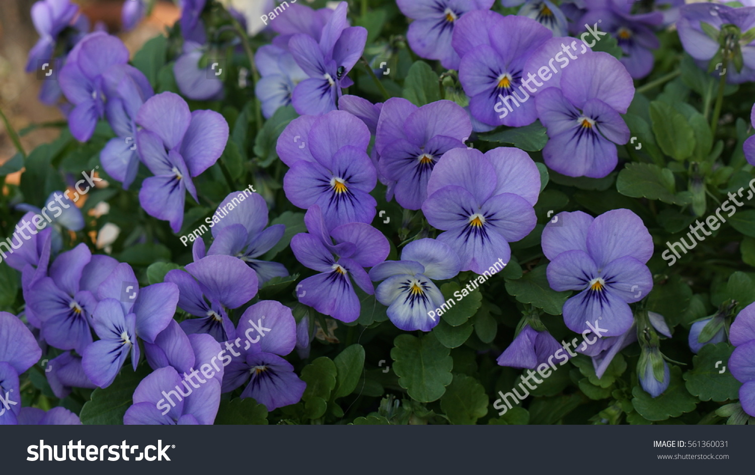 Background Many Small Blue Violet Purple Stock Photo Edit Now