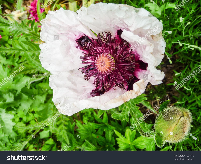 White Flower Asturias 2016 Ez Canvas