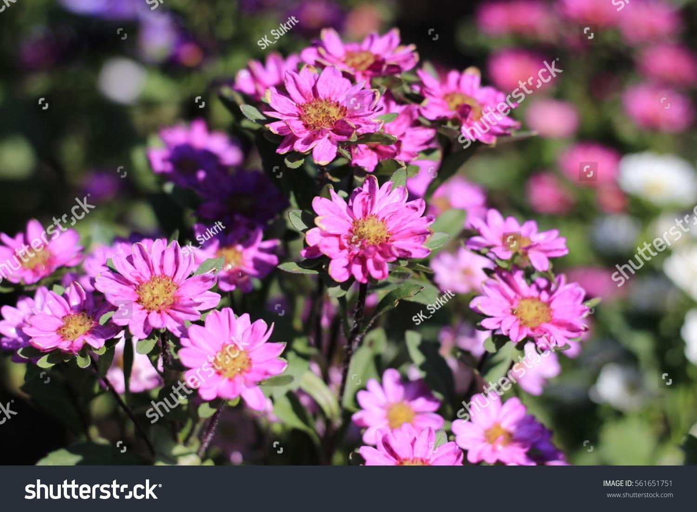 Beautiful Bright Flowers Ez Canvas