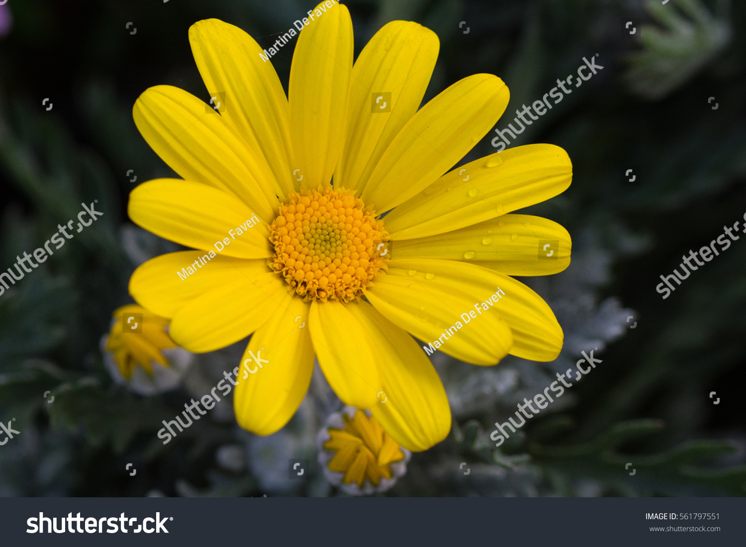 Pinwheel Yellow Daisy With Buds Centered Ez Canvas
