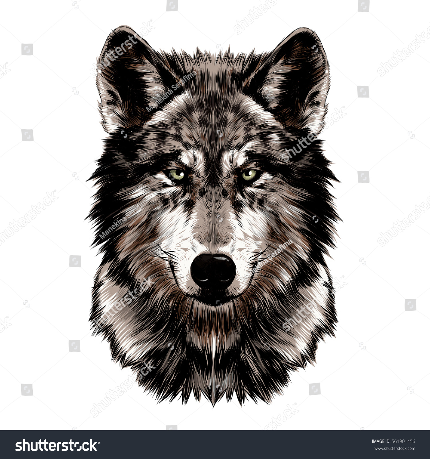 wolf face vector color drawing stock vector 561901456 shutterstock