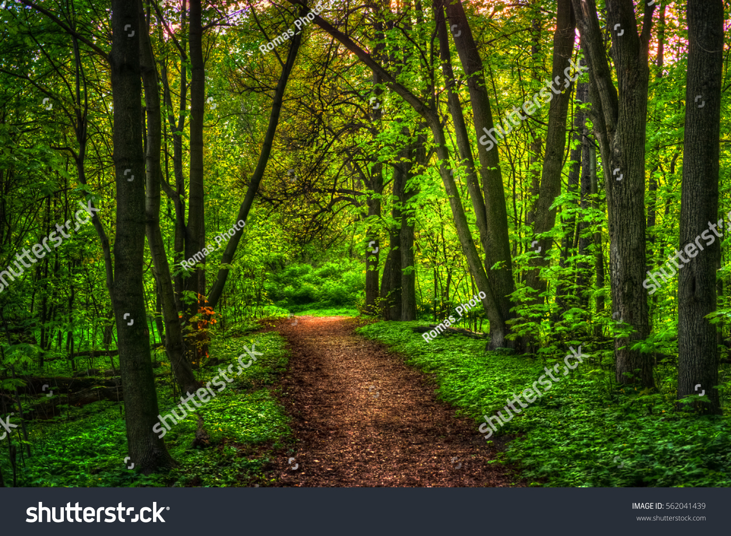 Colorful Summer Landscape Pathway Woods Green Stock Photo (Royalty ...