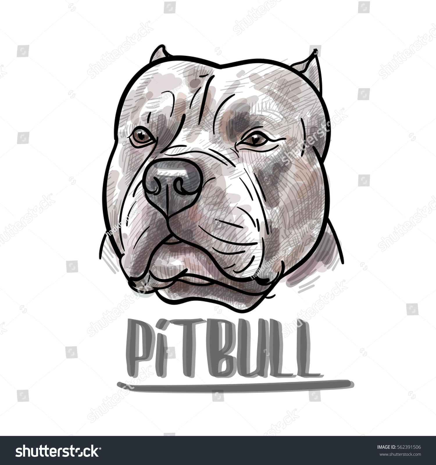 Drawing Pitbull Head On White Backgroundvector Vector de stock ...