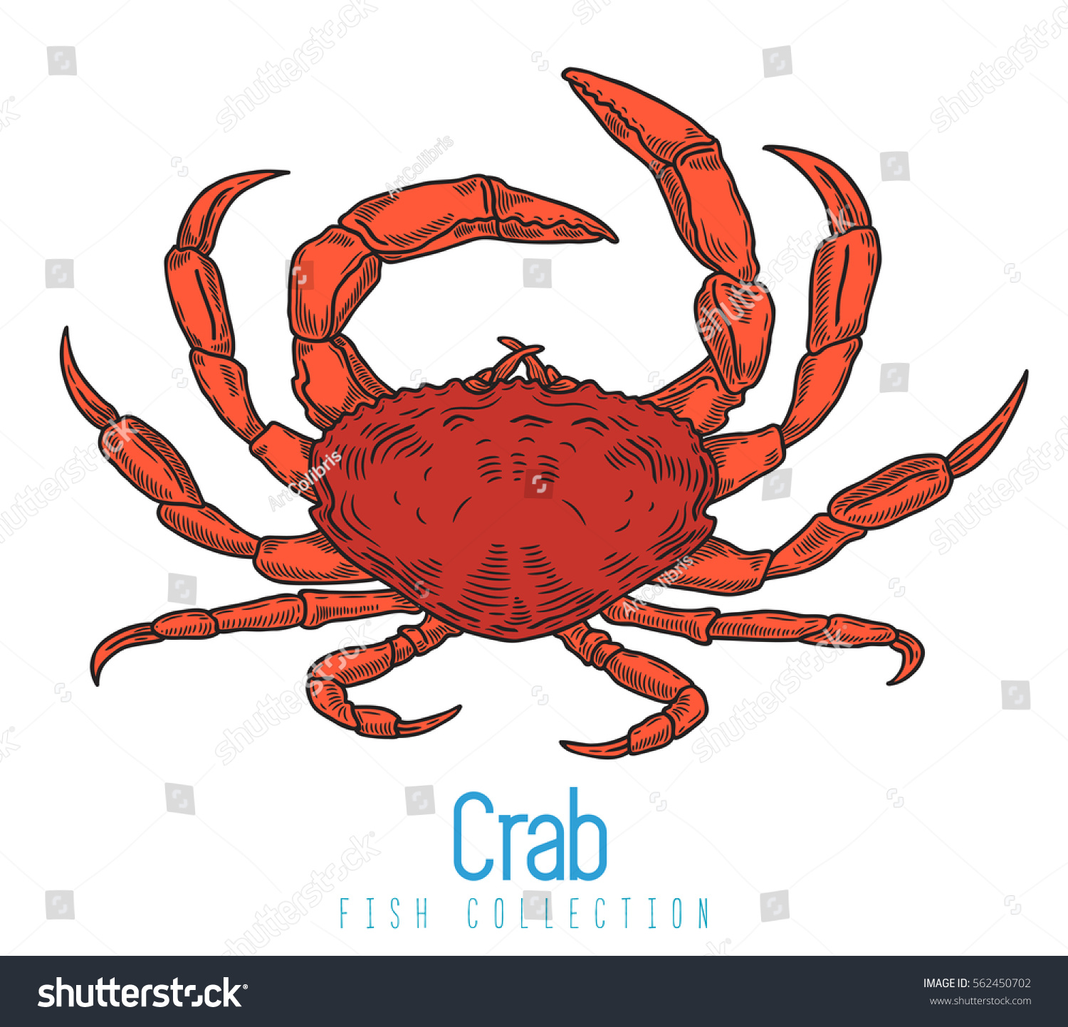 Crab Color Drawing On White Background Stock Vector HD (Royalty Free ...
