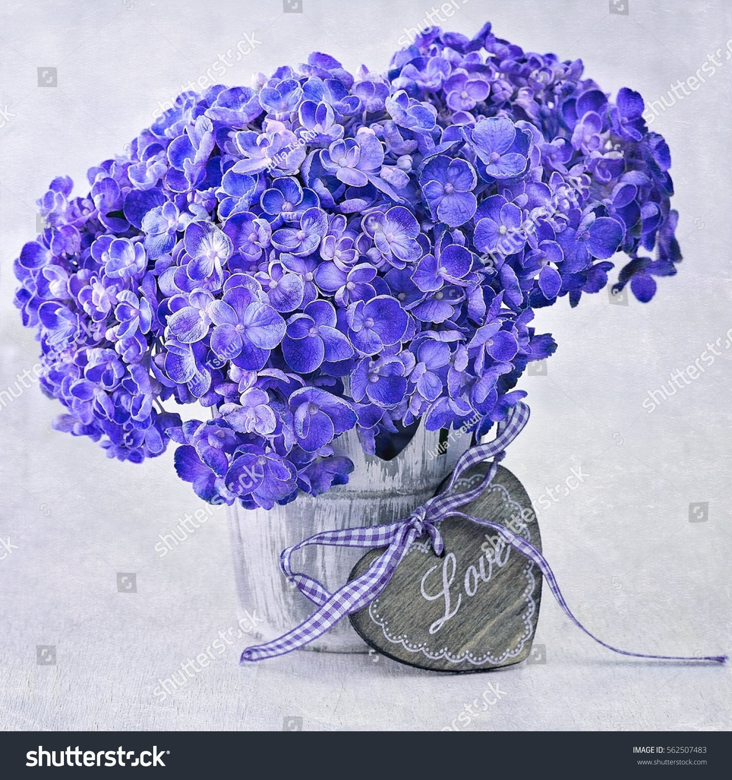 Beautiful Hydrangea Flowers Pot Decorated Heart Stock Photo Edit