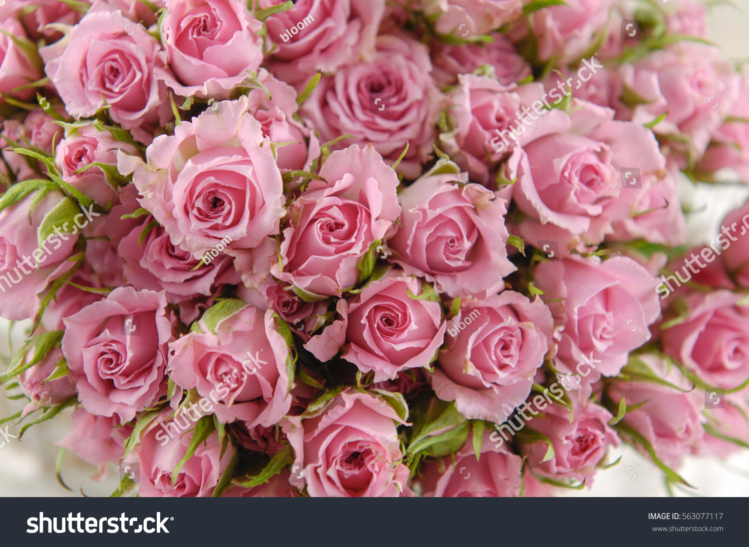 Big Bunch Of Multiple Pink Roses Ez Canvas