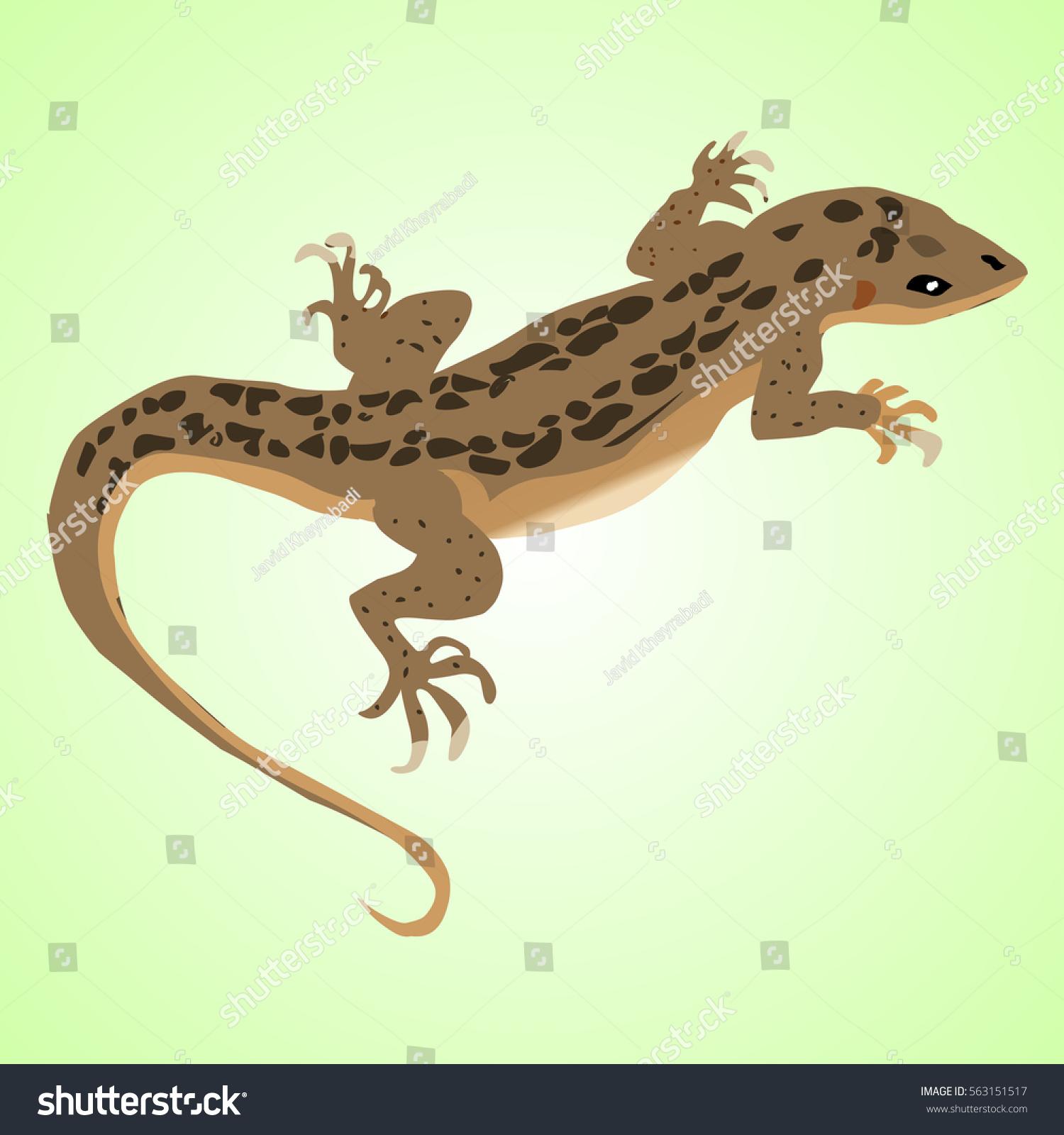 Chameleon Outline Tattoo: Lizard Stock Illustration 563151517