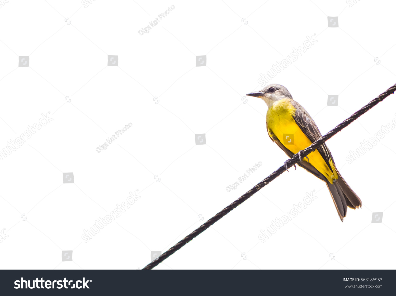 Small Yellow Bird On Wire Profile Stock Photo (100% Legal Protection ...