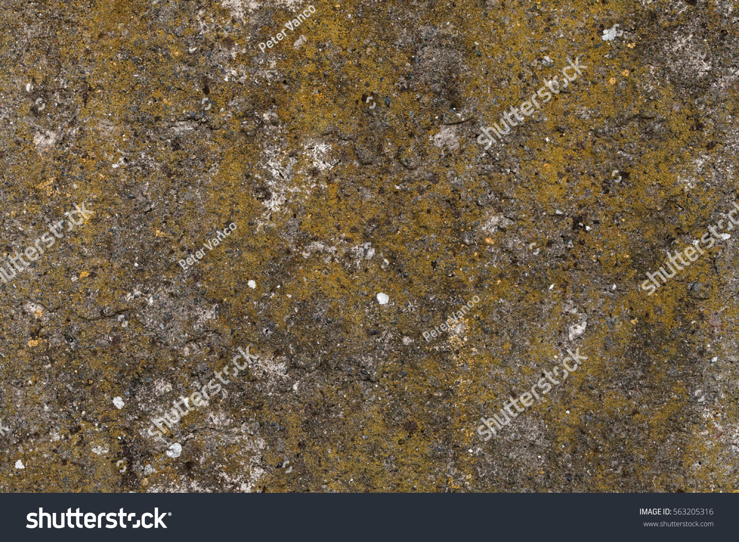 Old concrete wall moss on texture stock photo 563205316 for Old concrete wall texture
