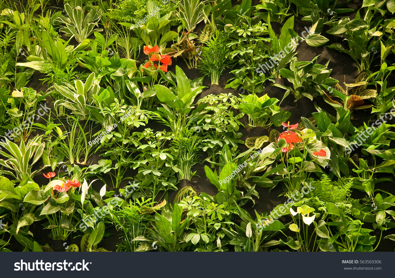Indoor Greenery Vertical Wall Large Green Stock Photo Edit Now