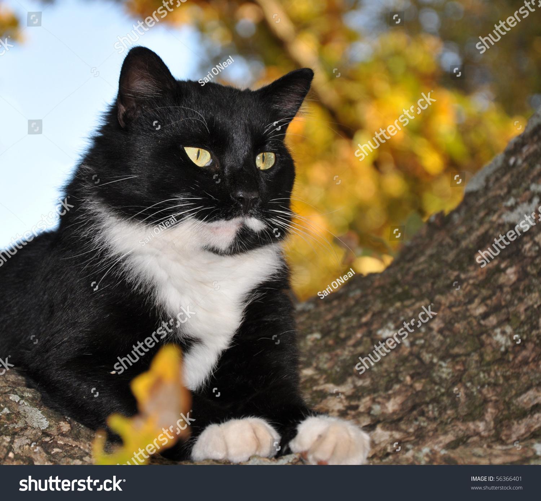 stock-photo-handsome-tuxedo-cat-with-str