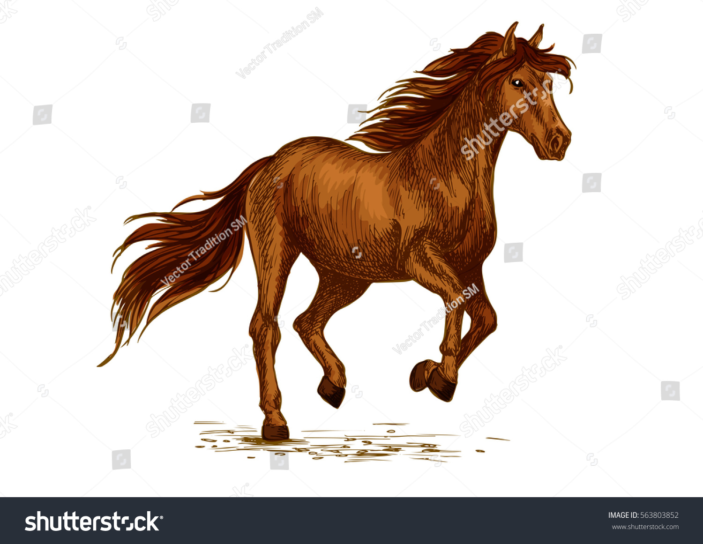 Brown Arabian Mustang Horse Running Racing Stock Vector ...