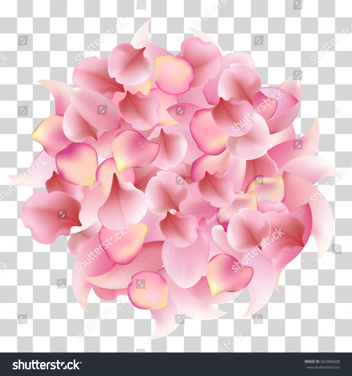 Rose Sakura Lotus Petals On Transparent Stock Vector Royalty Free