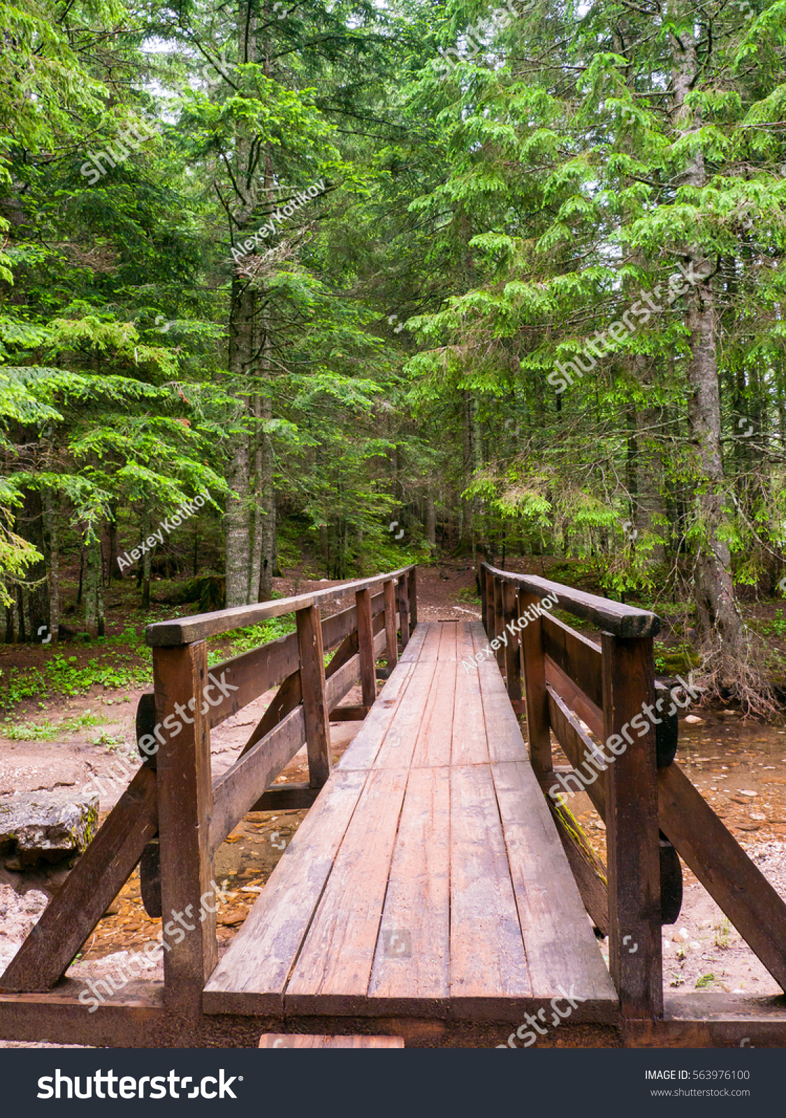 wooden footbridge to walk at the coniferous forests durmitor