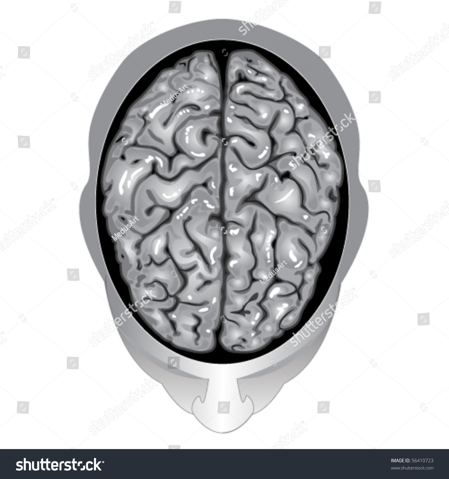 brain top view vector - photo #10