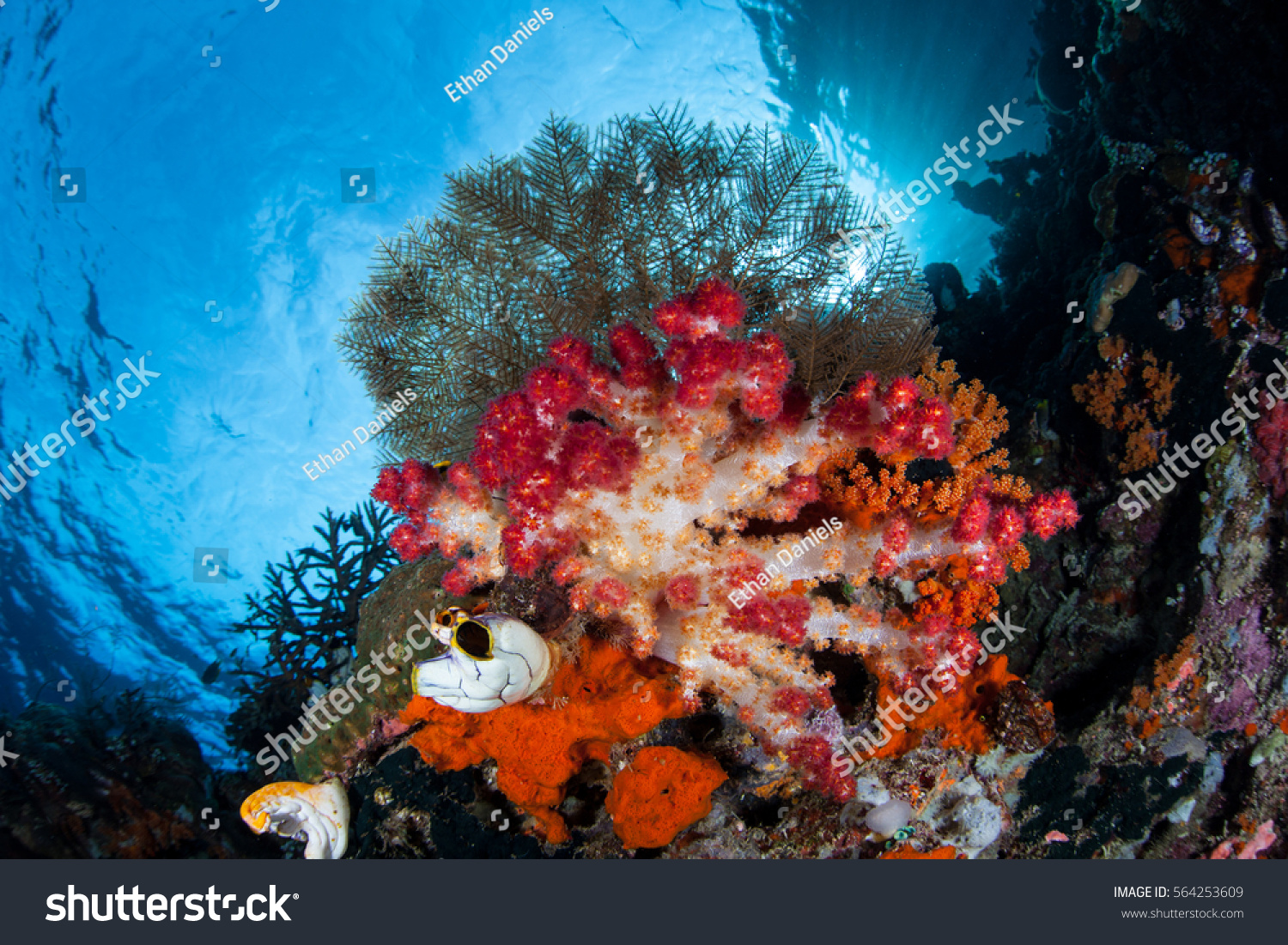 Colorful Soft Corals Other Invertebrates Grow Stock Photo 564253609 ...