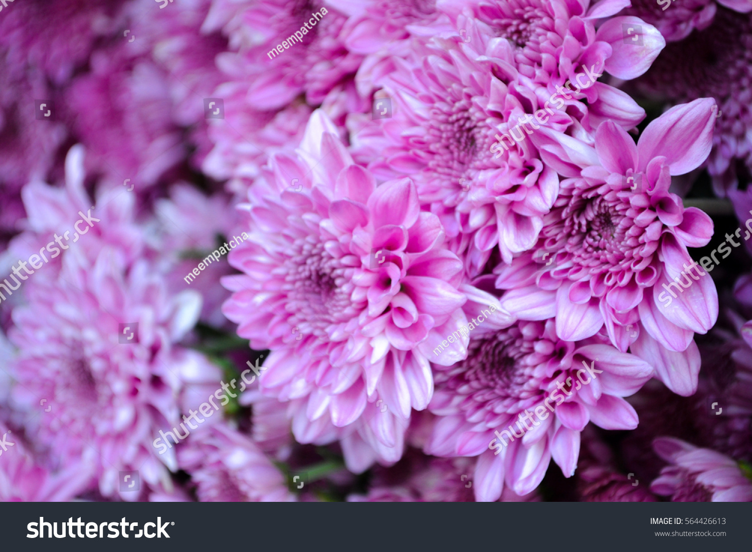 These Are Blooming Purple Or Pink And White Flowers Called