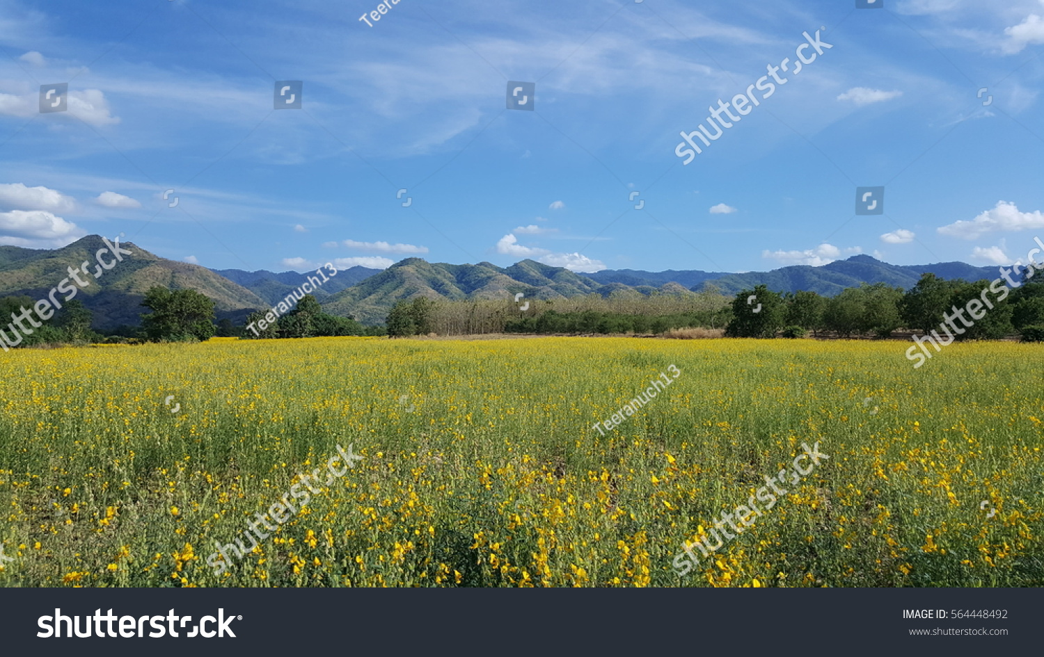 Little Yellow Flowers Grass Background With Mountain Light Blue Sky