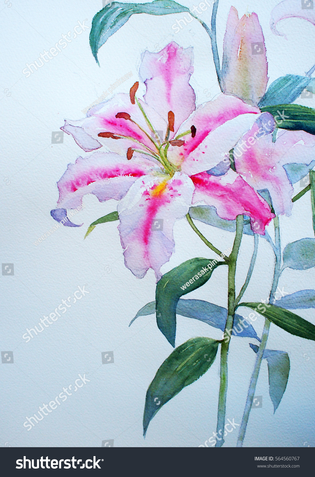 Lily Flowers Backgrounds Textures Watercolor Stock Illustration