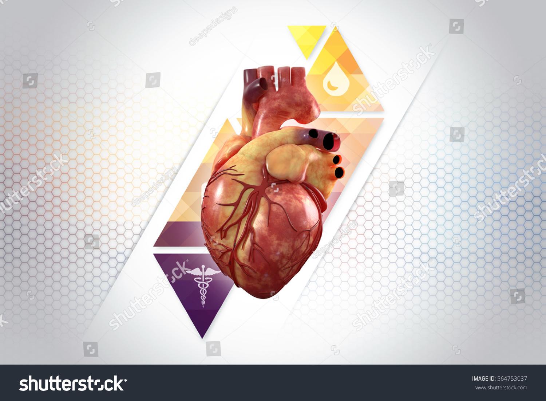 3 D Anatomy Human Heart Stock Illustration 564753037 - Shutterstock