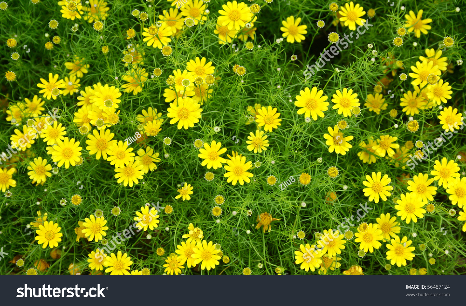 Yellow Color Flower Background Stock Photo Edit Now 56487124