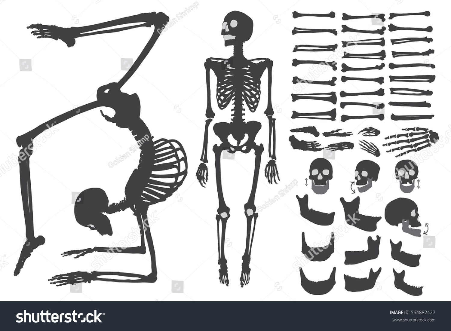 Human Bones Skeleton Silhouette Collection Set Stock Vector Royalty
