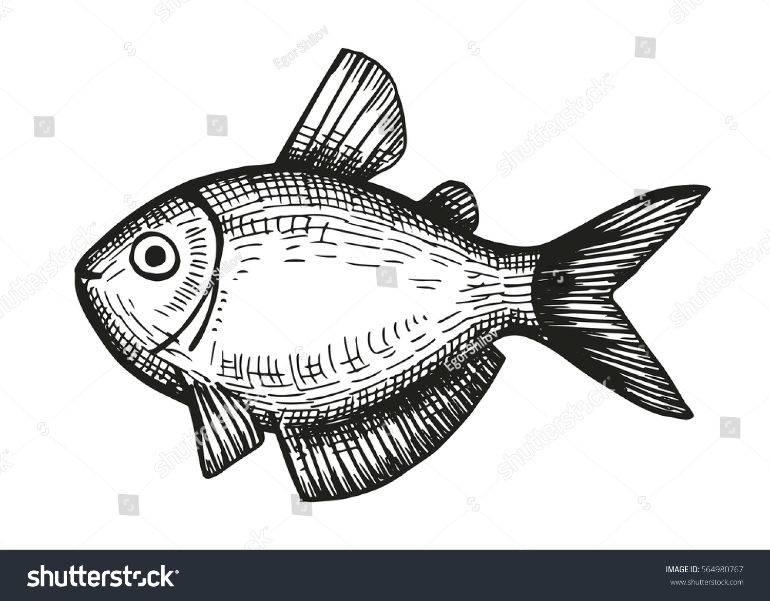 Exotic Sea Fish Aquarium Sketch On Stock Vector Royalty Free