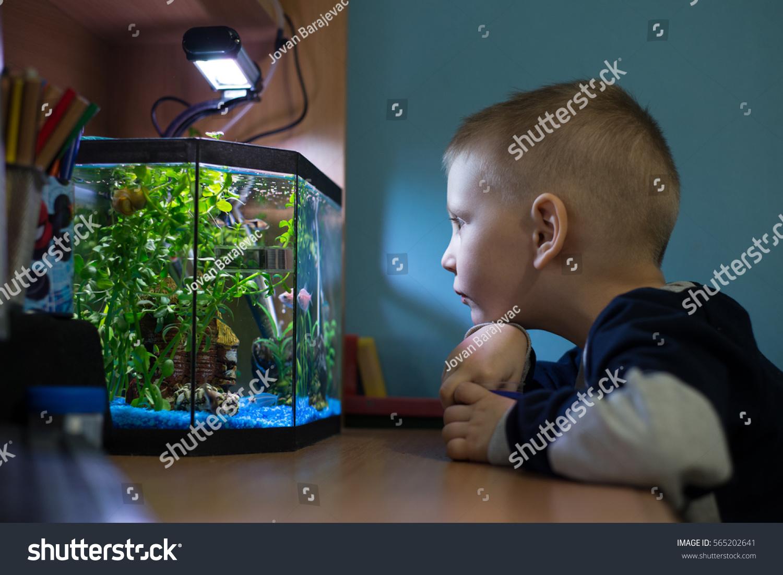 boy watching fish tank his room stock photo 565202641 shutterstock