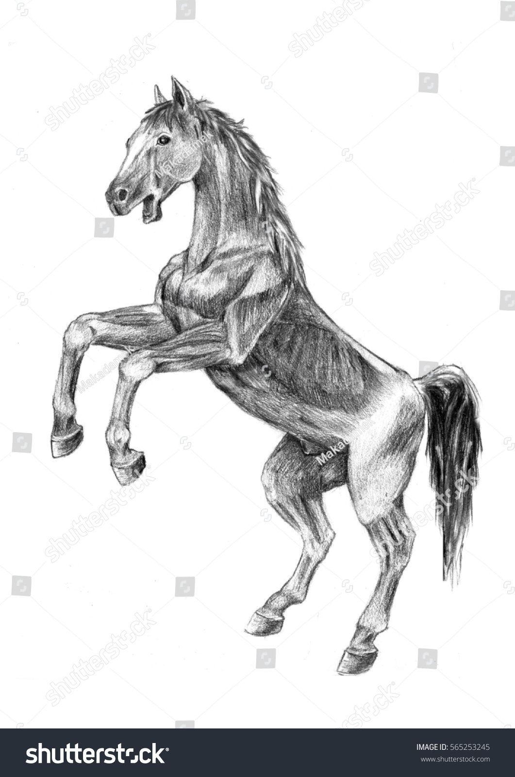 Thi Realistic Sketches Anatomy Horse Sketch Stock Illustration ...