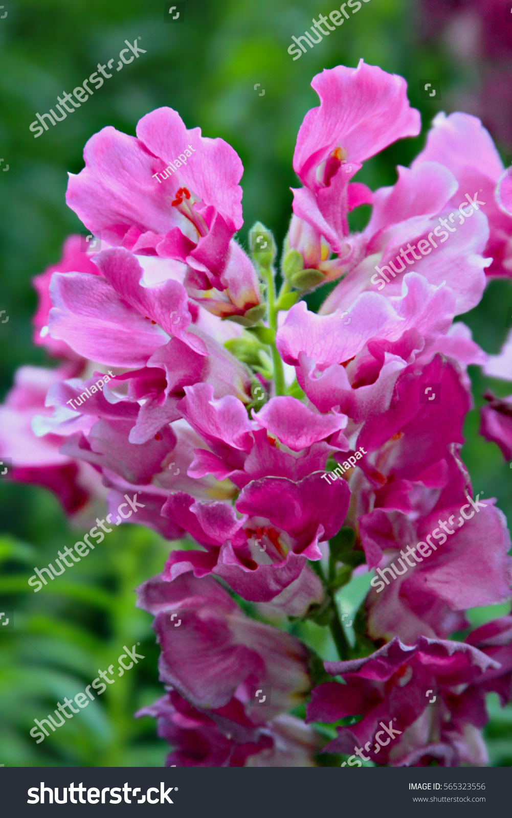 Small Pink White Flowers Lovely Beautiful Green Stock Photo Edit