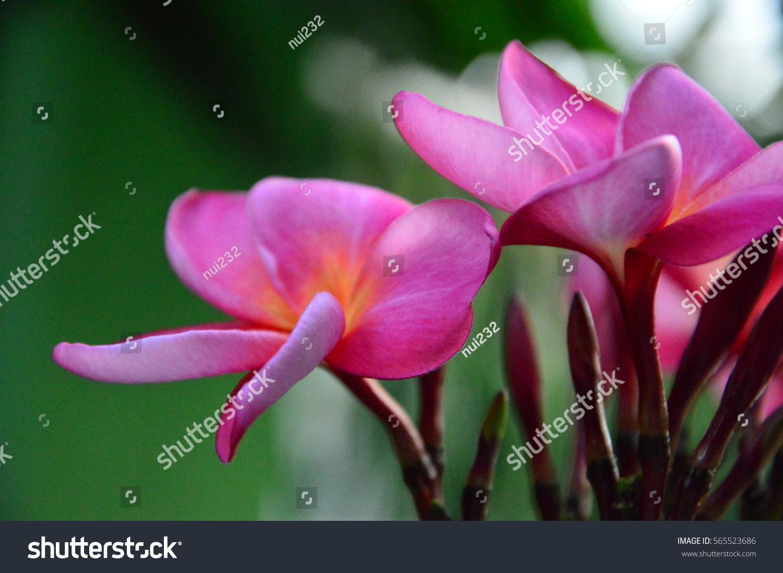 Flamingo Flower Ez Canvas