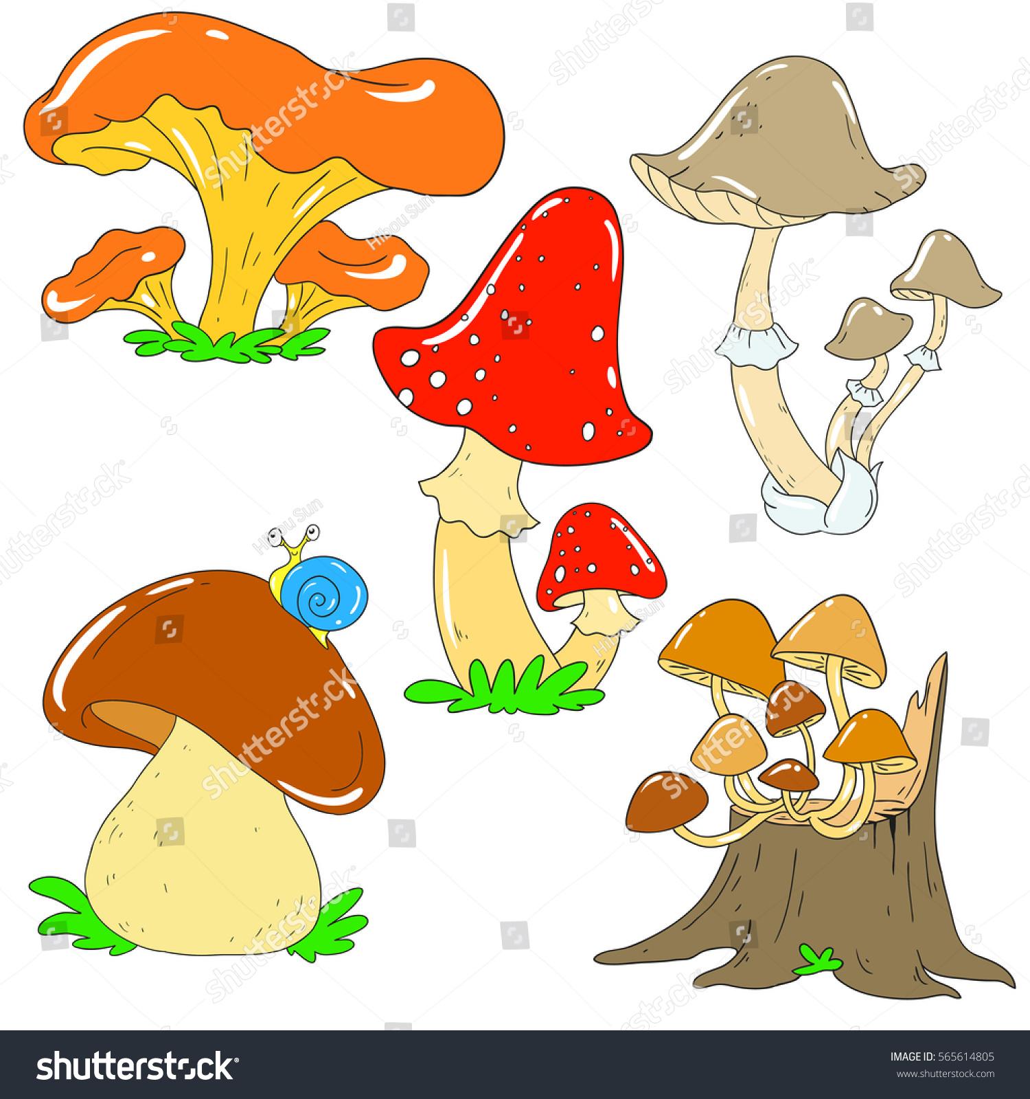 Collection of forest mushrooms. Chanterelle mushroom toadstool white fungus. Mycelium Vector  sc 1 st  Shutterstock & Collection Forest Mushrooms Chanterelle Mushroom Toadstool Stock ... islam-shia.org