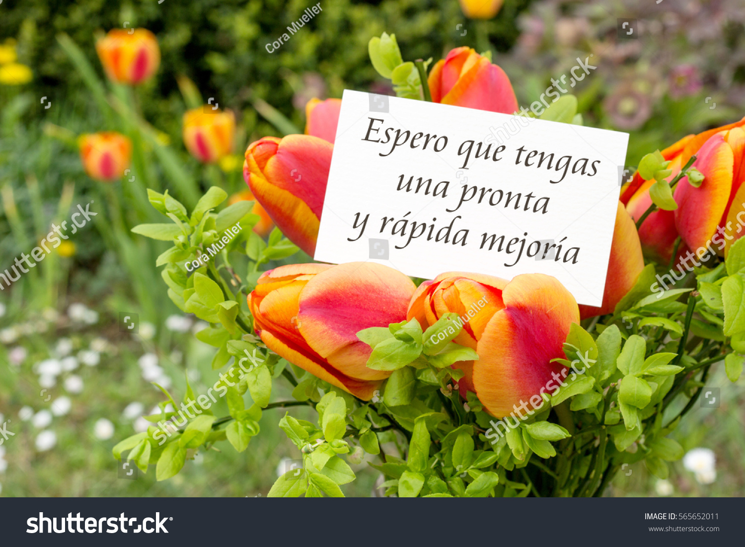 Greeting Card Tulips Spanish Text Hope Stock Photo Edit Now