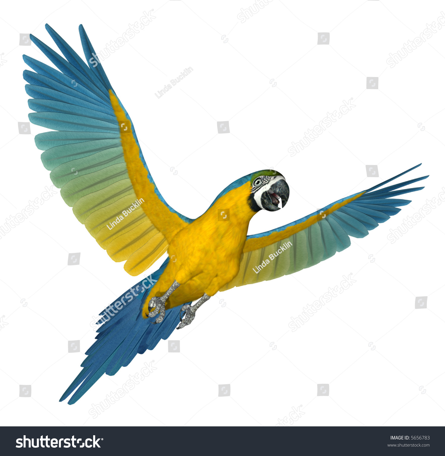 Stock Photo Blue And Gold Macaw Flying D Render