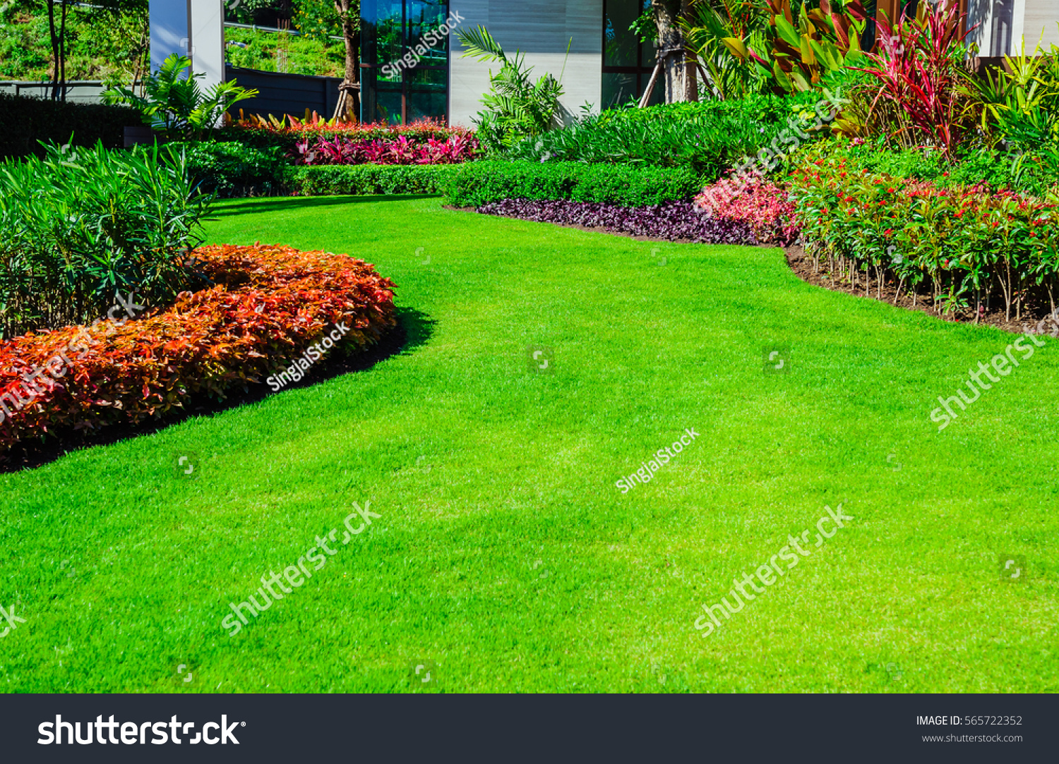 Green Grass Front Lawn Background Garden Stock Photo (Royalty Free ...
