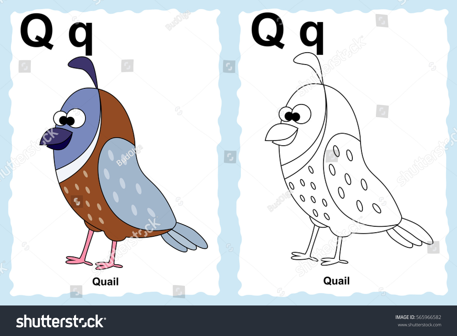 Alphabet coloring book page with outline clip art to color letter q cartoon quail coloring page for nursery school vector