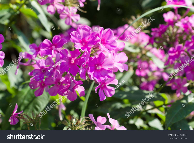Branch Plants With Lots Of Purple Flowers Ez Canvas